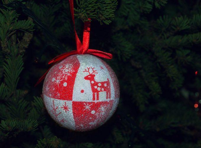 Co s vánočním stromečkem? Nechat v květináči nebo raději zasadit?
