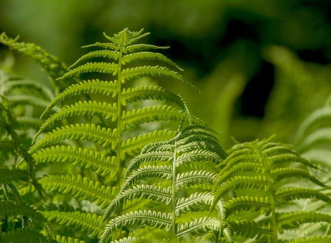 Čtyři pokojové rostliny, kterým se skvěle daří i ve stínu