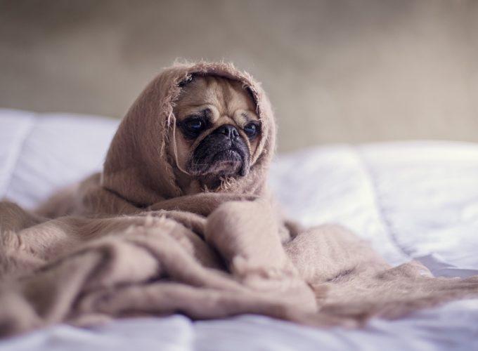3 rady jak pomoci nemocnému psovi