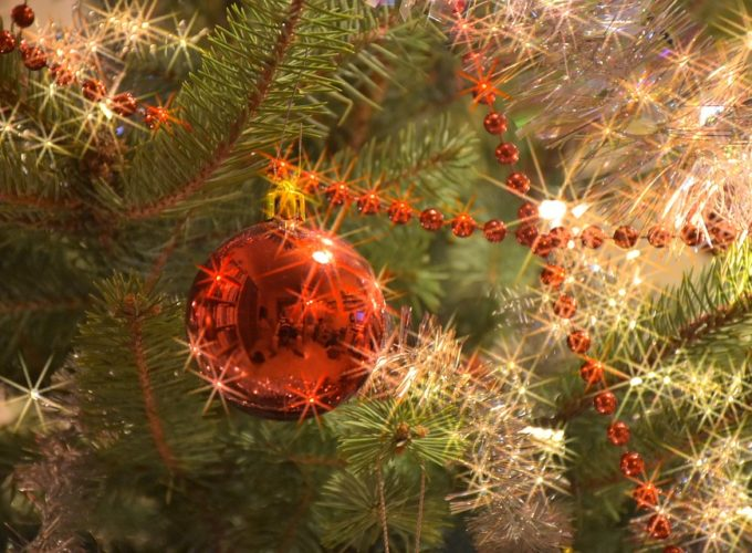 Vybíráme vánoční stromeček