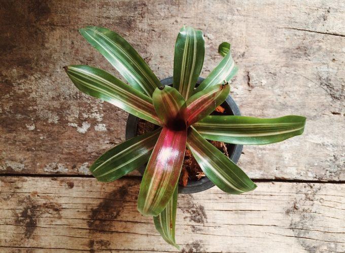 Vyplňte interiér pokojovými rostlinami, které nikdo nepřehlédne