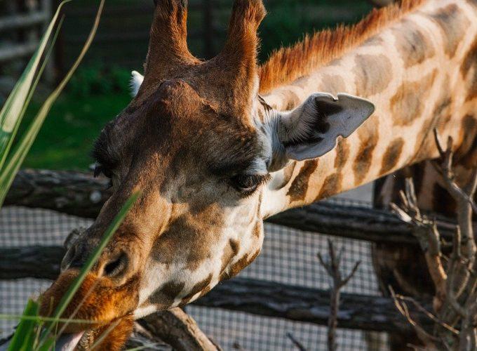 Zoologické zahrady se v Česku bouří proti pozdní možnosti otevřít